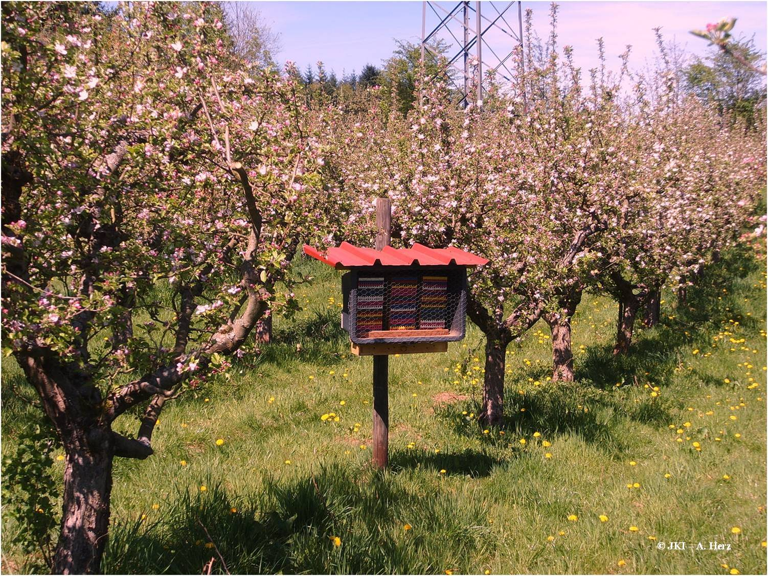 Flowering orchard with wild bee nesting box